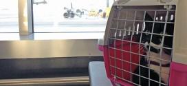Кот в переноске в аэропорту